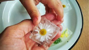 Замороженные кубики ромашки для лица